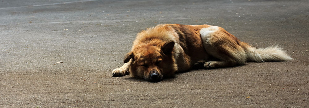 Dog Daycare Portland