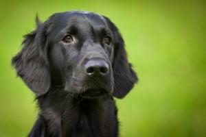 Dog boarding Beaverton OR