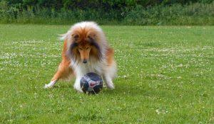 Dog Boarding Service in Gresham OR