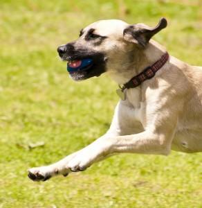 Dog Boarding Tigard