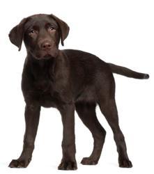 dog boarding Service in lake oswego or