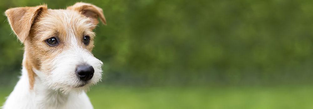 Dog Daycare Tigard