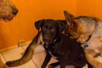 Dog Sitting in Tigard