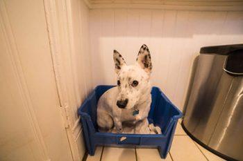 Dog Daycare Clackamas