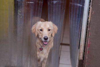 Doggie Daycare Portland