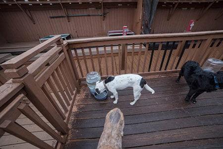 Dog Sitting Portland