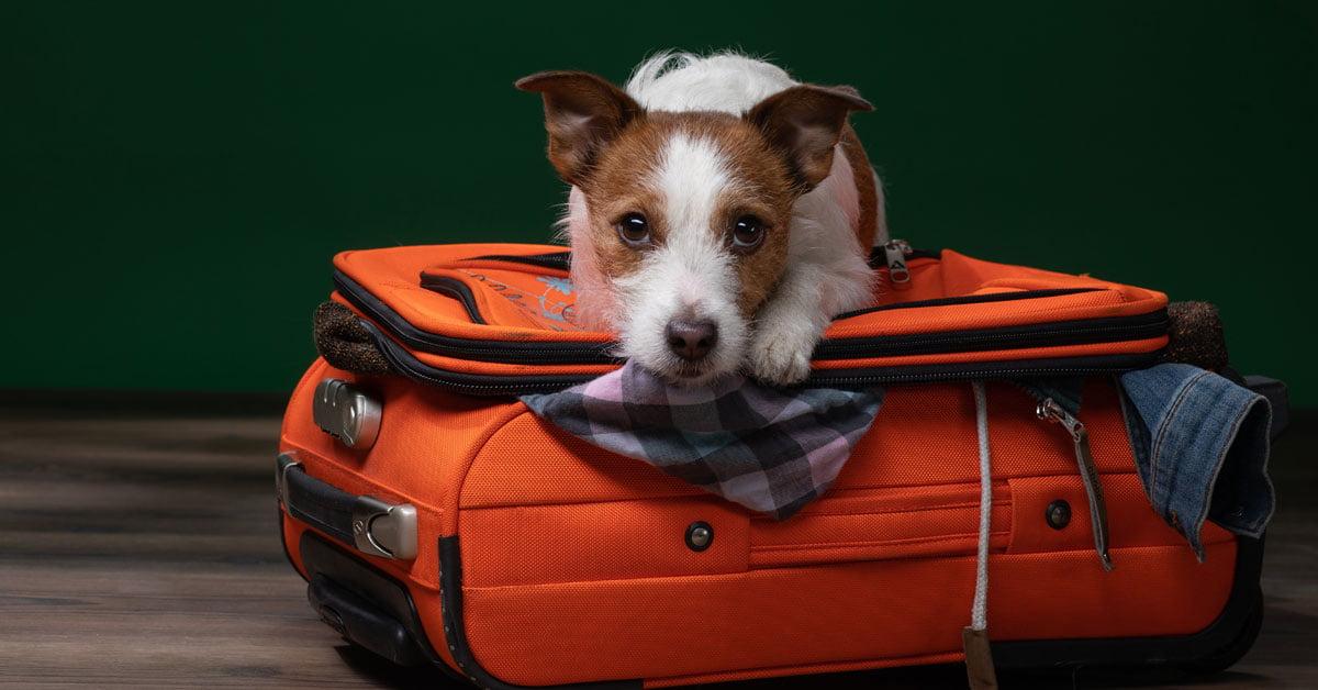 Dog Boarding Aloha
