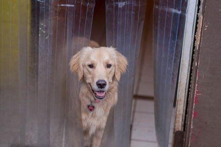 Dog Sitting Happy Valley