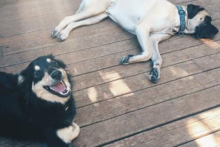 Dog Sitting Rates Gresham OR
