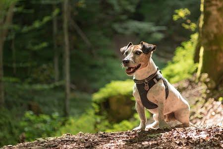 dog friendly trails portland