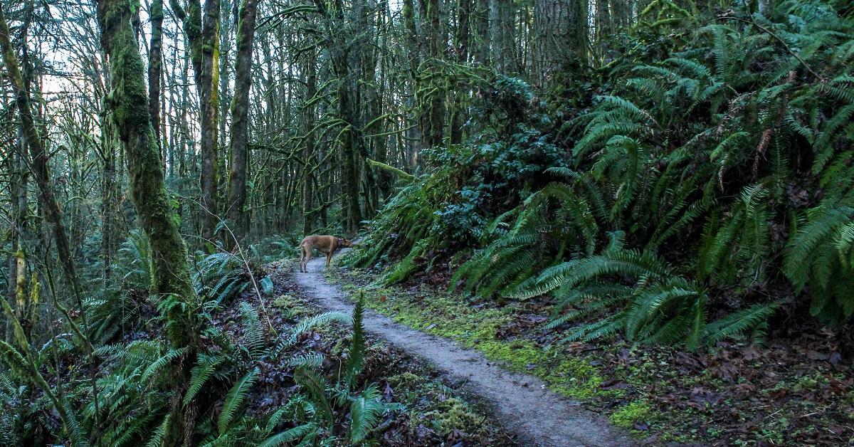 Dog Friendly Hikes Portland